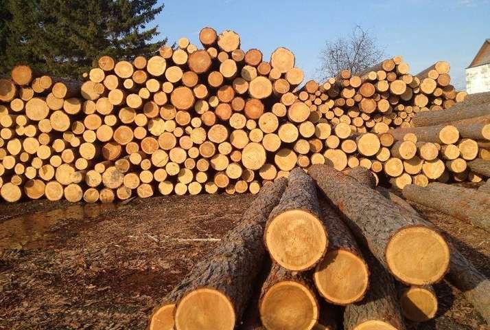 Аукціони з продажу деревини на Прозорро