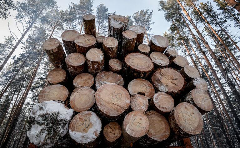 Как проходит продажа древесины на экспорт